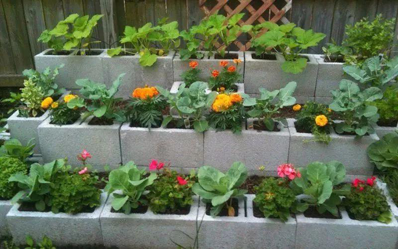 Cinder Block vs. Wood Raised Bed – Pros and Cons