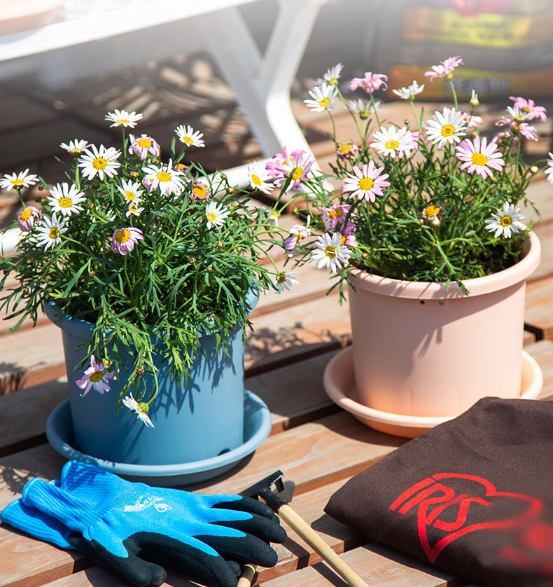 How to Sterilize Plant Pots Without Bleach