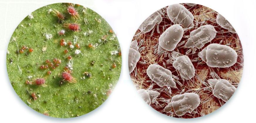 Spider Mites On Plants? will neem oil kill them?