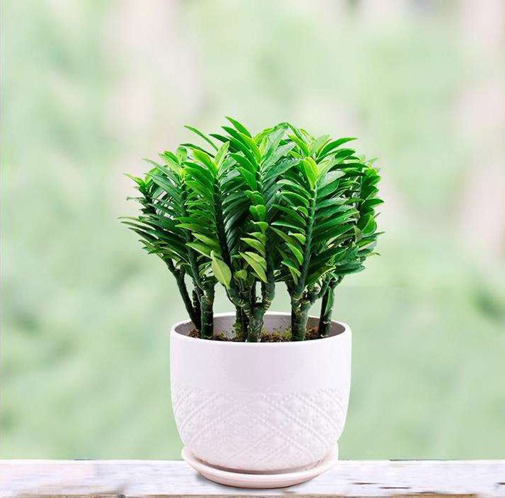 Can Plants Grow Without Sunlight