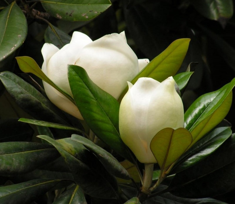 10 Slowest Growing Plants in the World
