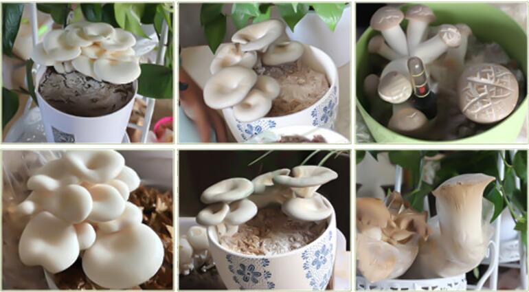 Are Mushrooms Plants? What is a mushroom?