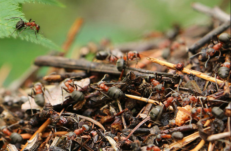 How to Get Rid of Ants in A Garden Bed
