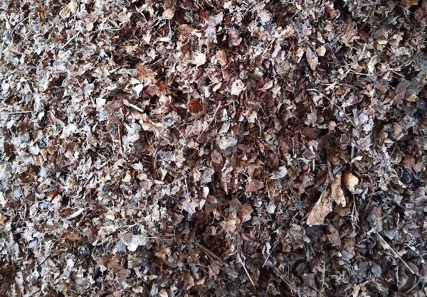 Do Oak Leaves Make Good Compost?